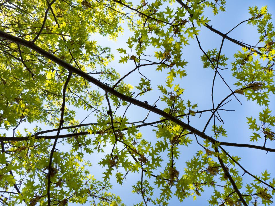 green trees plants nature branches leaves blue sky