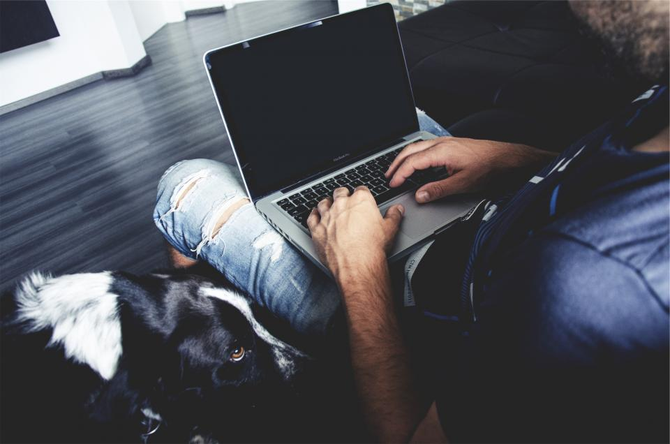 apple, macbook, laptop, computer, technology, man, guy, people, hands, dog, pet, animal, working, typing, sitting, business