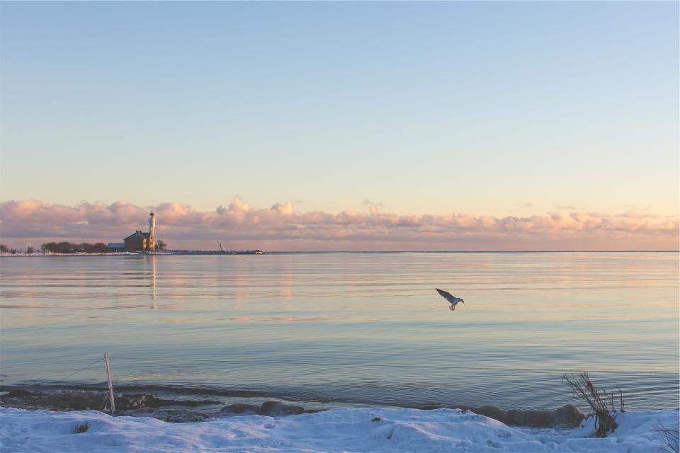 bird, animal, wings, flying, snow, water, coast, sunset, clouds