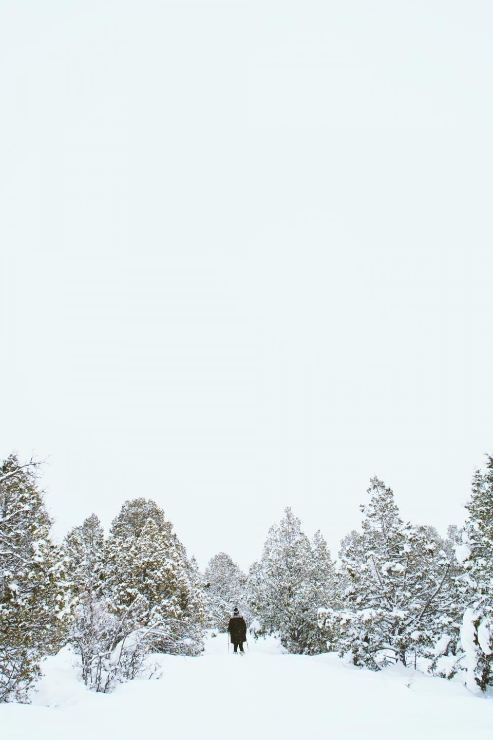 snow, winter, white, cold, weather, ice, trees, plants, nature, people, man, jacket, bonnet, alone, glide, ski, hobby, sport