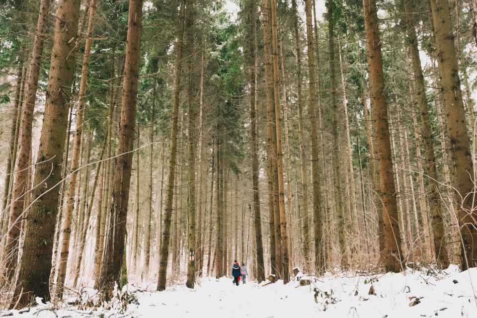 woods, forest, green, trees, green, travel, adventure, camping, people, couple, man, woman, snow