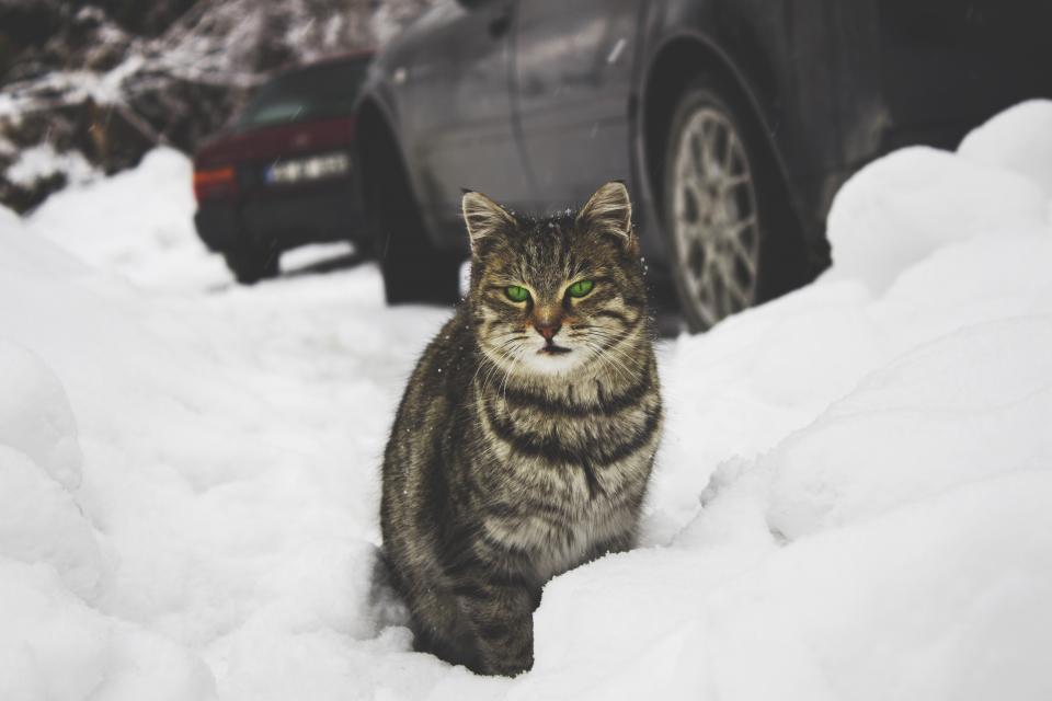 cat animal pet outdoor winter snow iceberg