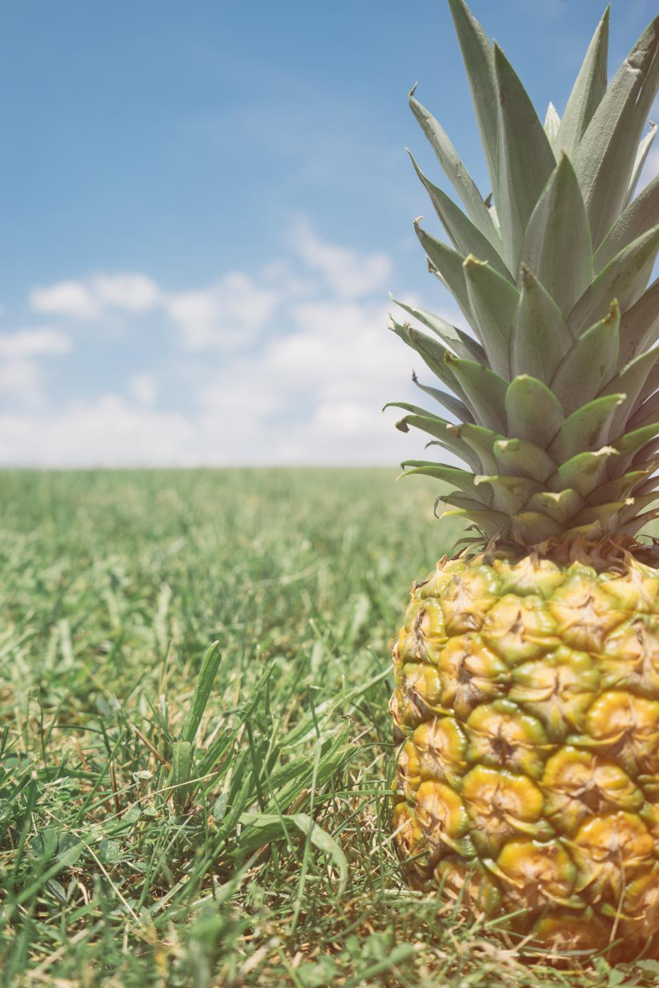 pineapple dessert appetizer fruit juice crop nature green clouds sky
