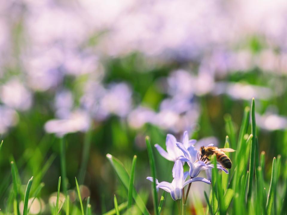 green, leaf, flower, blur, bokeh, bee, insect, nectar, grass