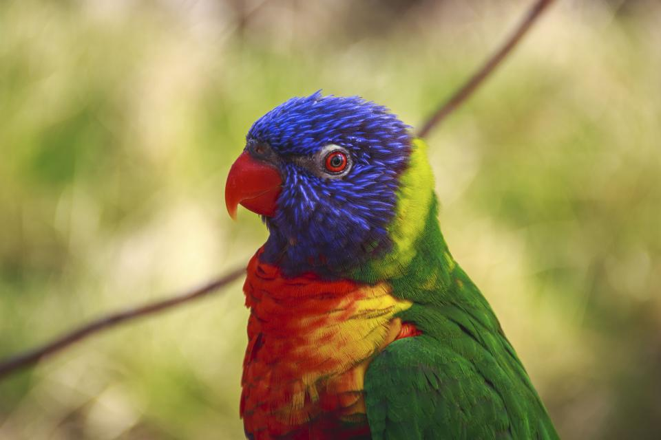 bird beak feather animal fly parrot colorful