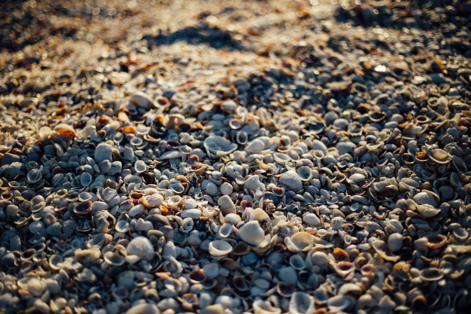 sea shells beach sand rocks pebble sunshine summer shore