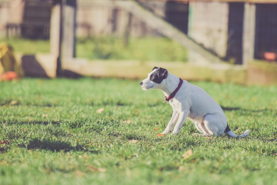 animal, dog, pet, plant, grass, field, outside, fence, nature, green, blur, friend