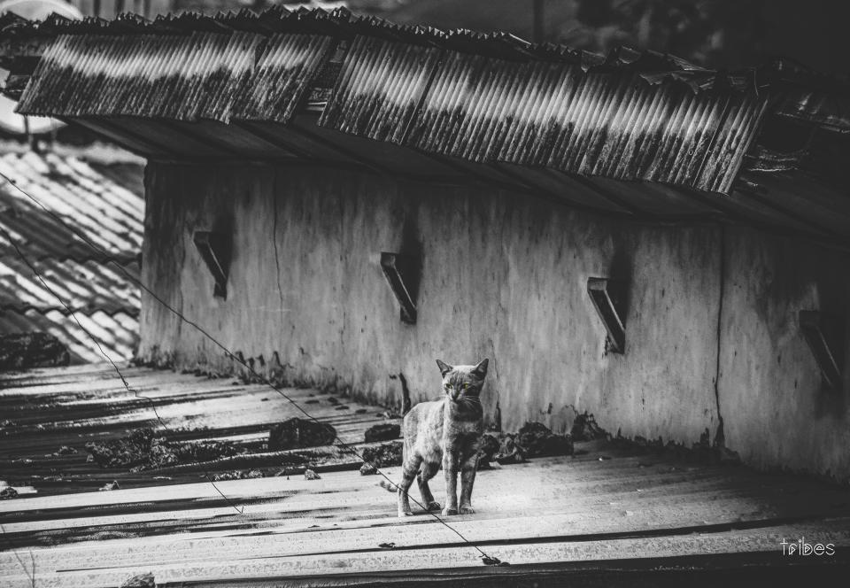 black and white cat pet kitten animal rooftop