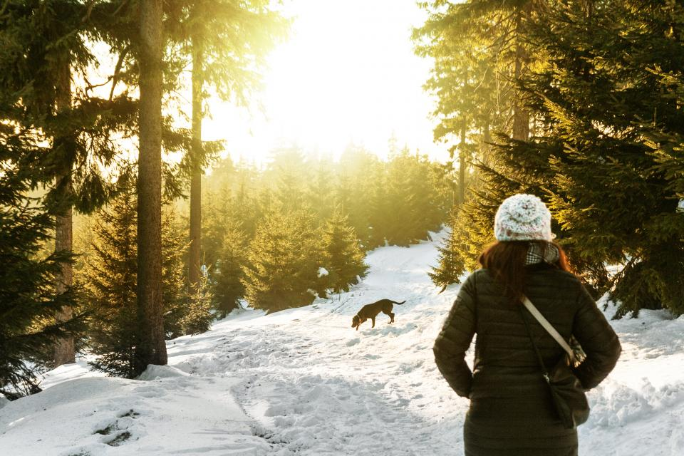snow winter white cold weather ice trees plants nature people woman travel adventure trek dog woods forest