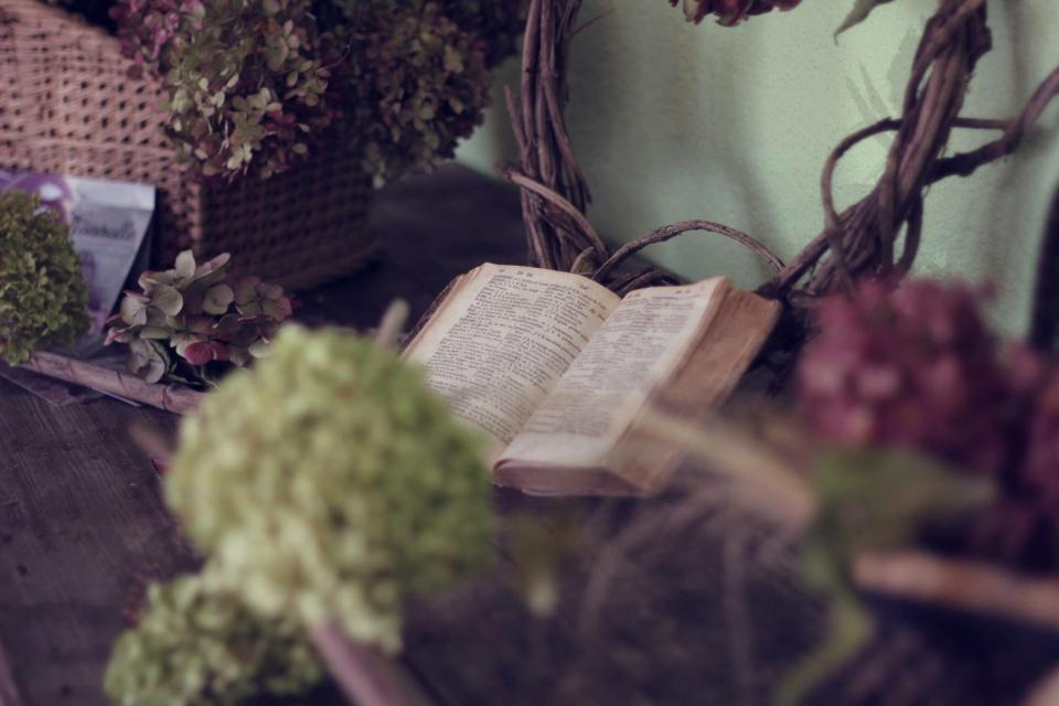 holy, book, bible, reading, religion, plants, flower, wooden, table, basket, blur