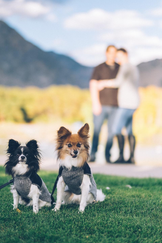dogs, puppy, pet, playground, green, grass, outdoor