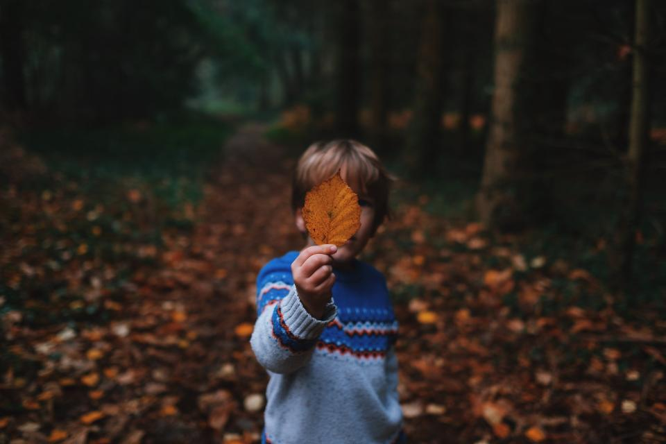 tree, plant, leaf, fall, nature, outdoor, travel, people, boy, kid, child