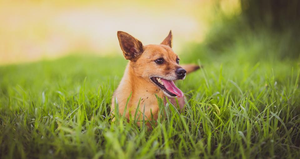 dog puppy animal grass happy grass