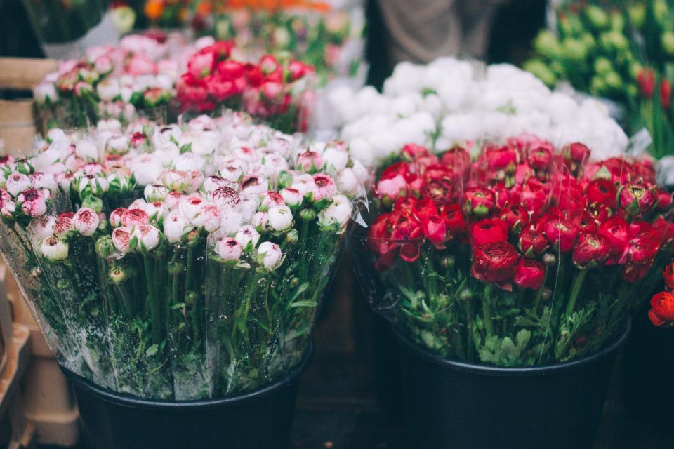 Die richtige Wahl der Geburtstagsblumen - Bedeutung der Blumen