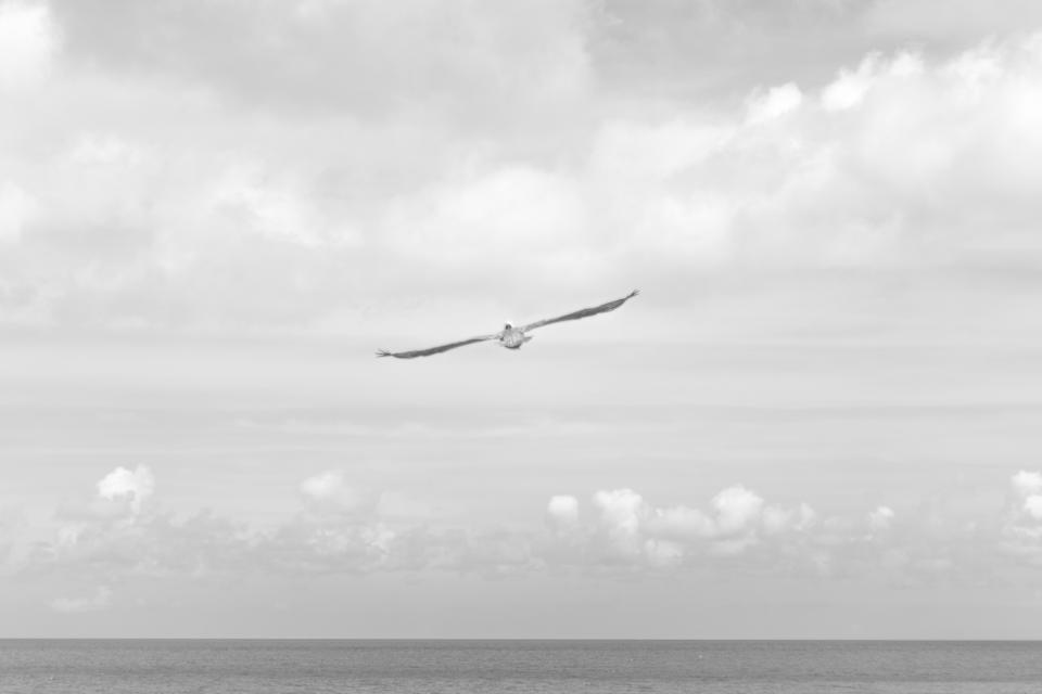 black and white, sky, bird, clouds, water, flying