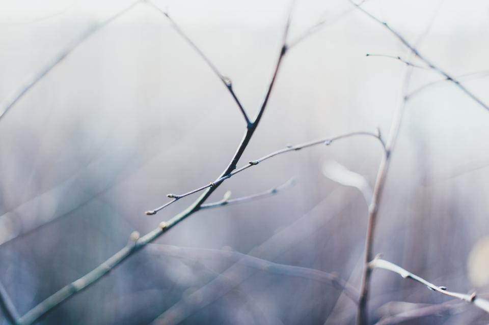 tree branch blur snow winter