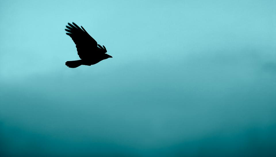 bird, animal, flying, blue, water