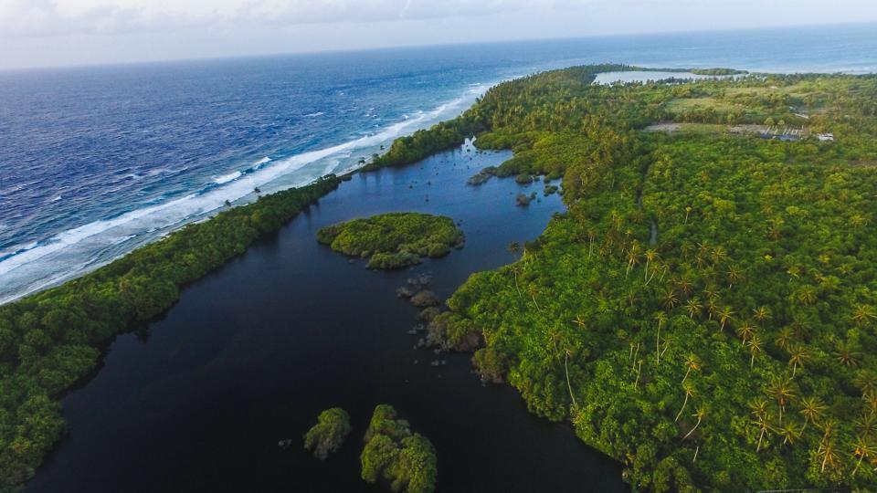 green trees plants water aerial view beach sea ocean water sky