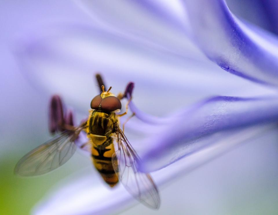 bee, insect, animal, flower, plant, petal, nature