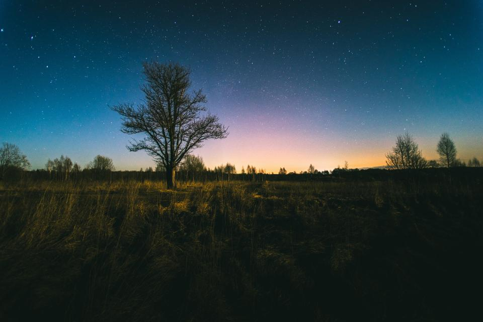green grass trees plants nature field outdoor sky night stars galaxies
