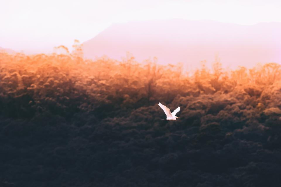 trees, bird, flying, nature, sky, cloud, aesthetic, forest, leaves