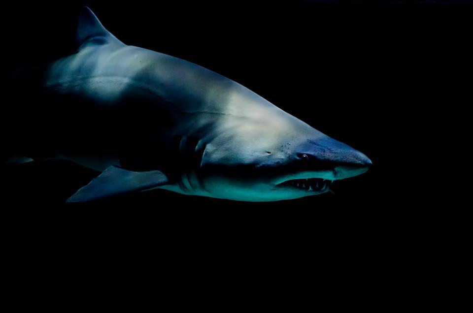 sea, water, ocean, underwater, fish, whale, shark
