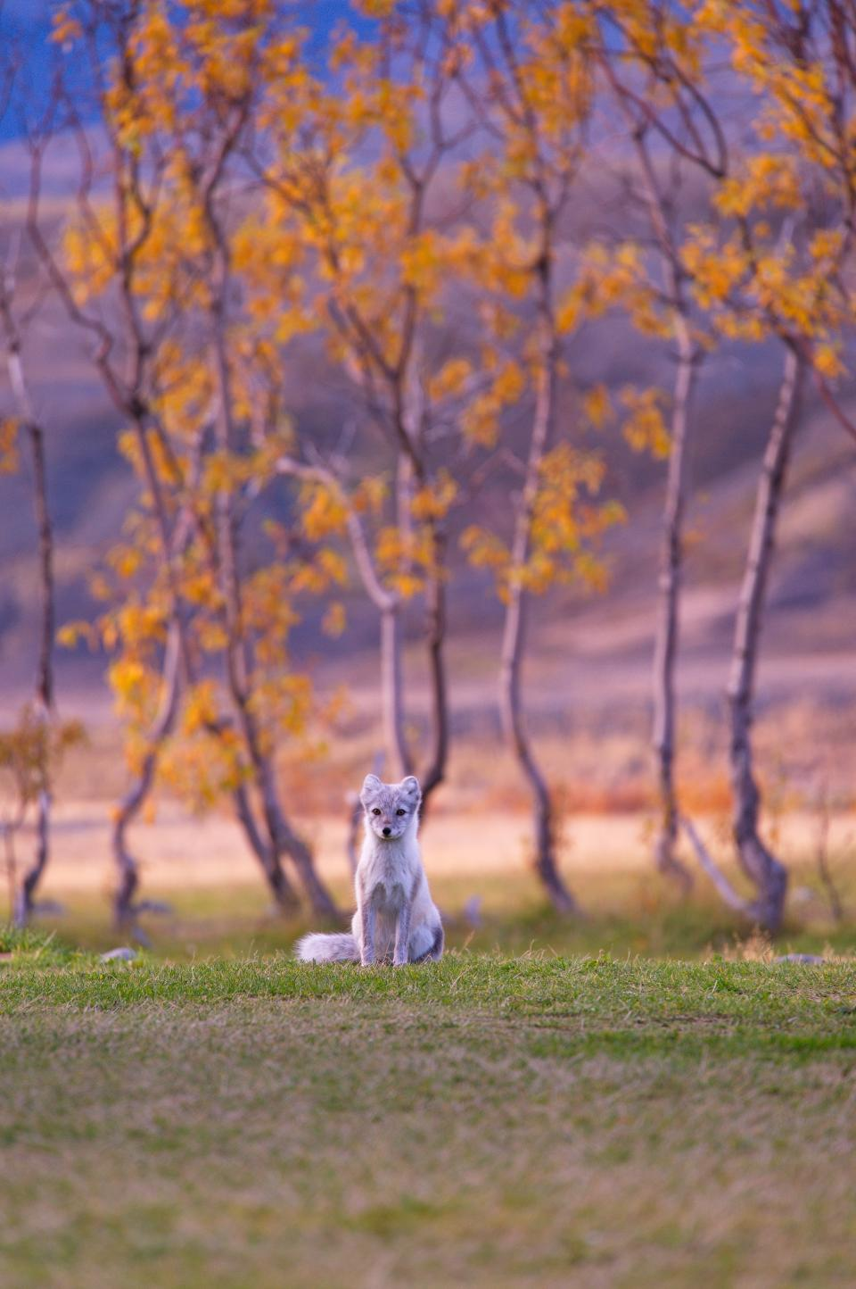 dog, puppy, animal, pet, playground, grass, autumn, fall, trees, nature, mountain