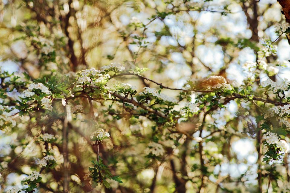 flower, white, petal, bloom, garden, plant, nature, autumn, fall, green, leaves
