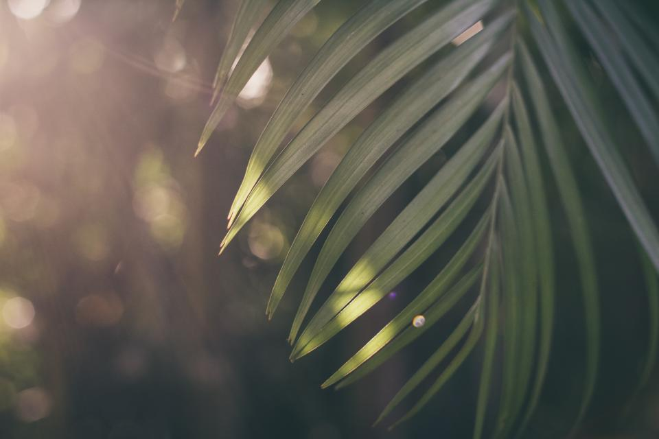 sunrise morning green leaf plant outdoor nature blur bokeh