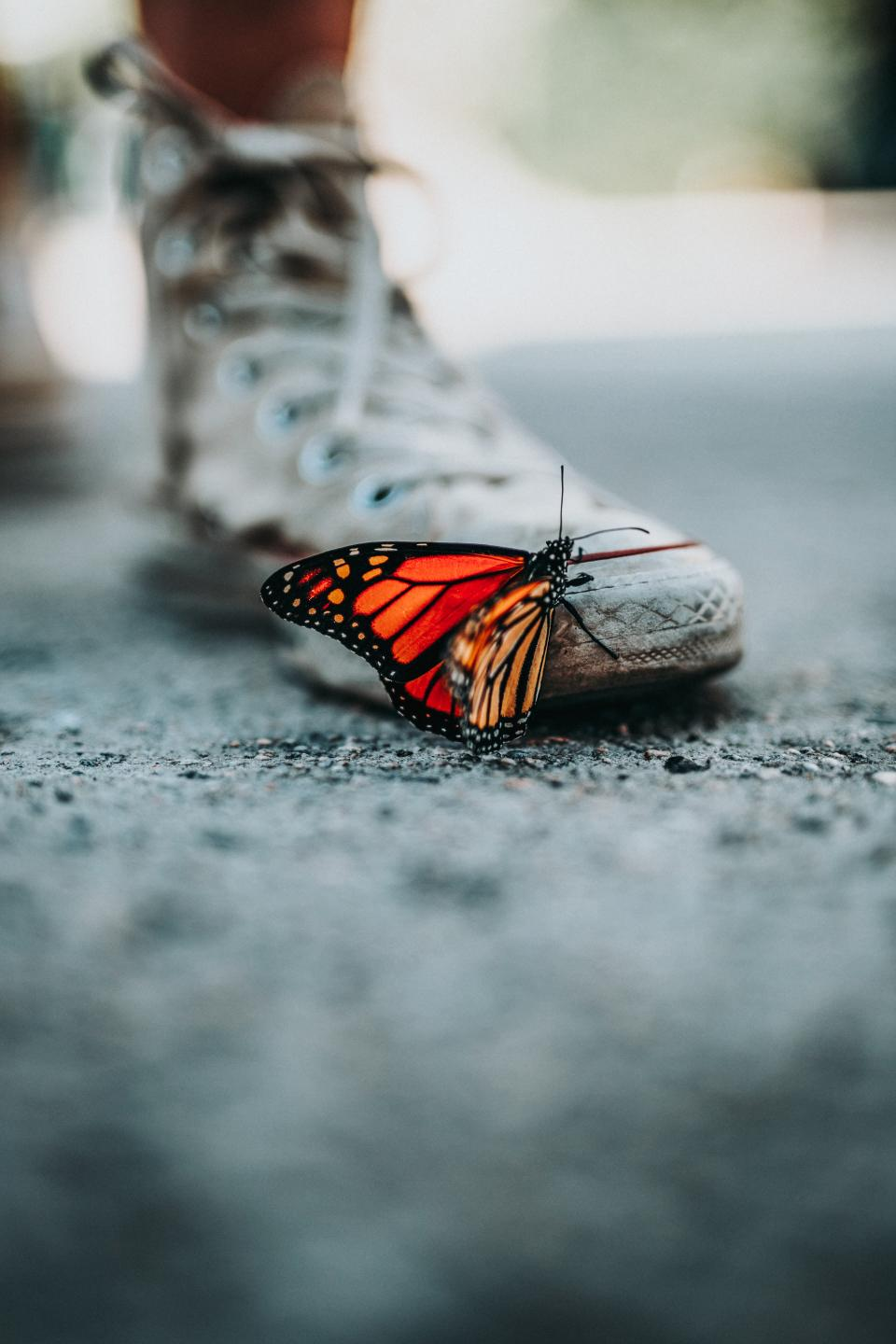 butterfly, insect, animal, street, blur, shoe, sneakers