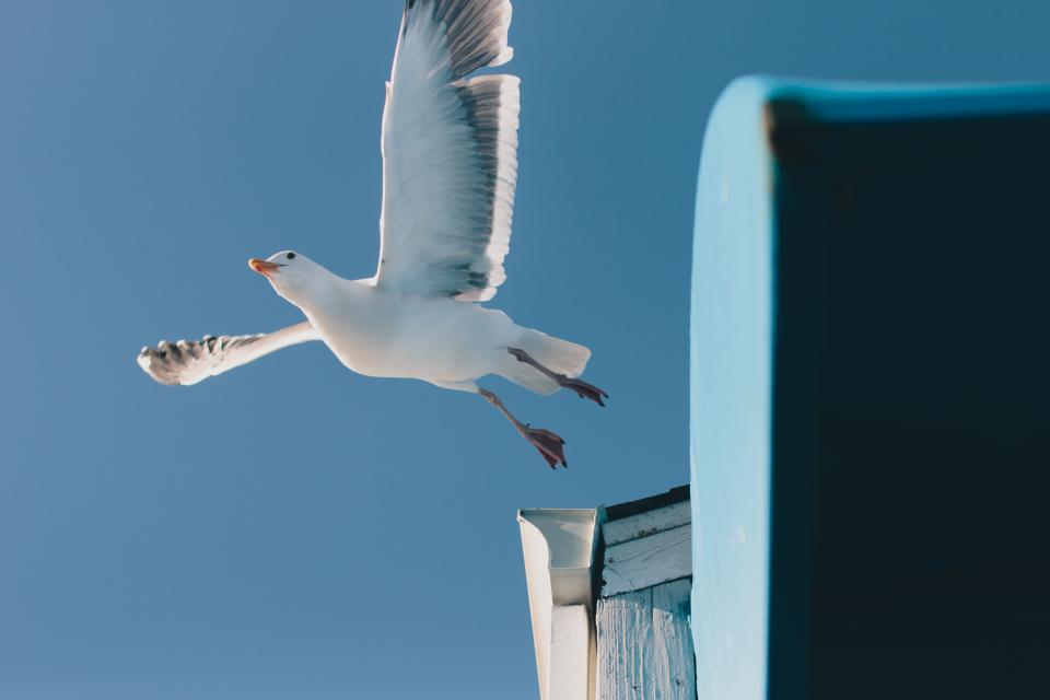 seagull bird animal blue sky nature daylight