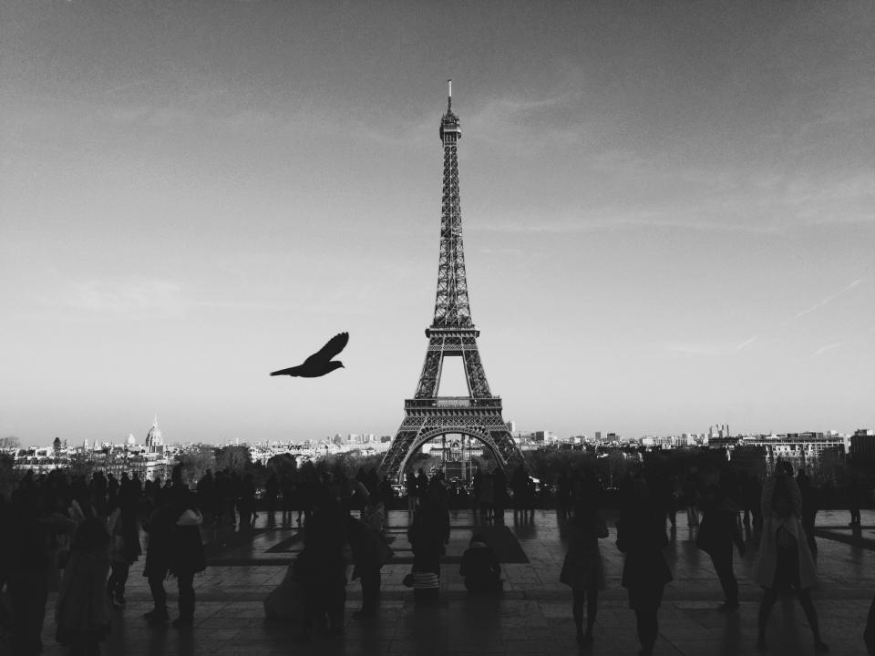 black and white, paris, france, eiffel tower, bird, people, pedestrians, sky, flying, city, buildings