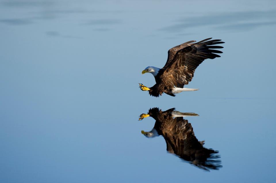 blue, sky, cloud, bird, flying, animal, reflection