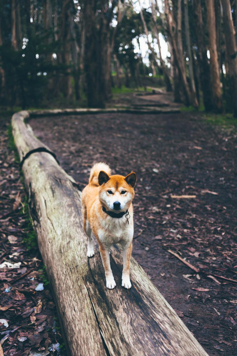 puppy, pet, dog, animal, friend, outdoor, woods, trees, plants, nature, blur