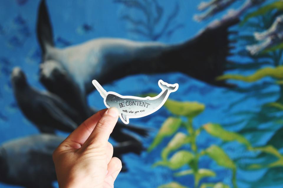 fish, aquarium, hand, dolphin, plants, sea, water, bokeh, blur, sea, ocean