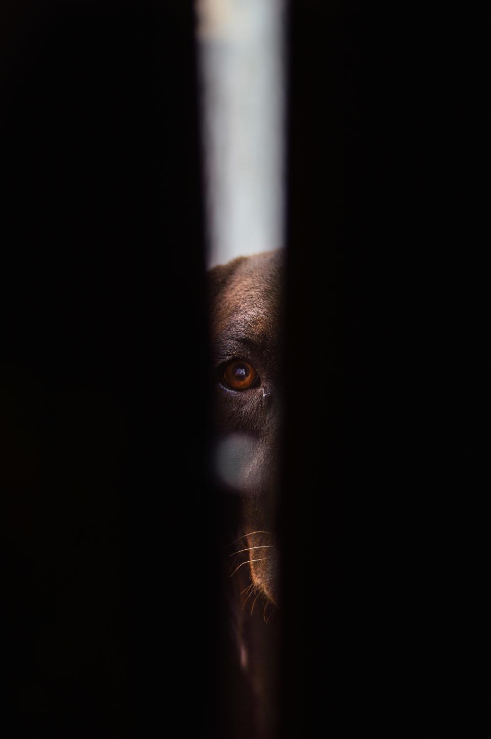 dark, black, dog, animal, pet, eye