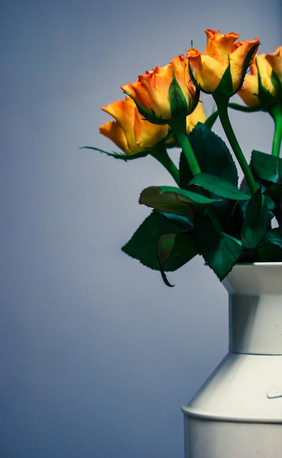 flower, yellow, petal, bloom, garden, plant, nature, autumn, fall, vase, flowerpot, pot