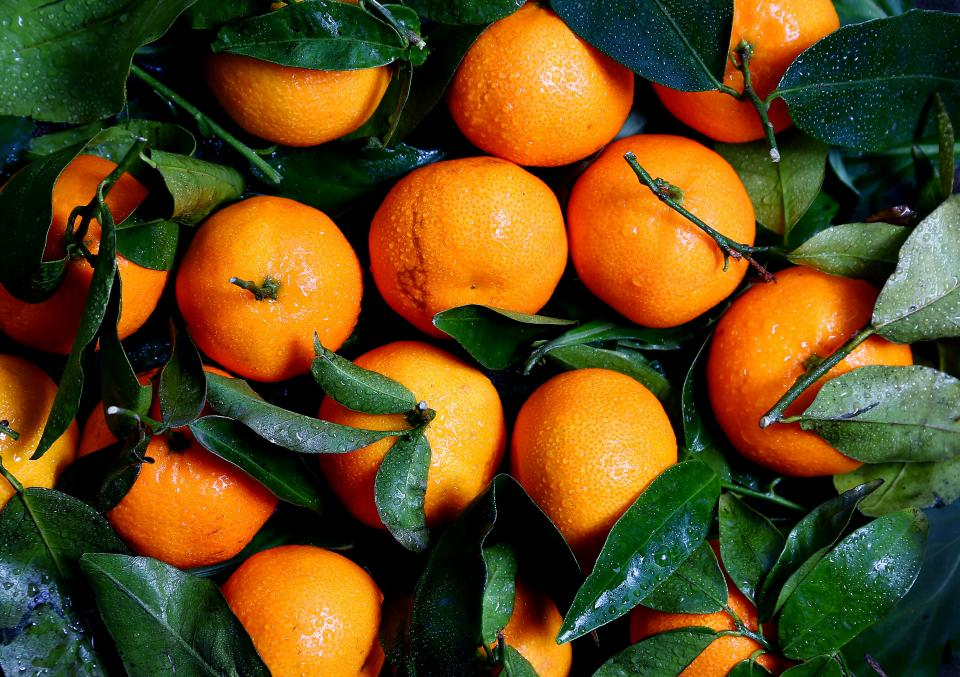 oranges fruits citrus vitamins juicy food green leaf harvest farm wet water drops