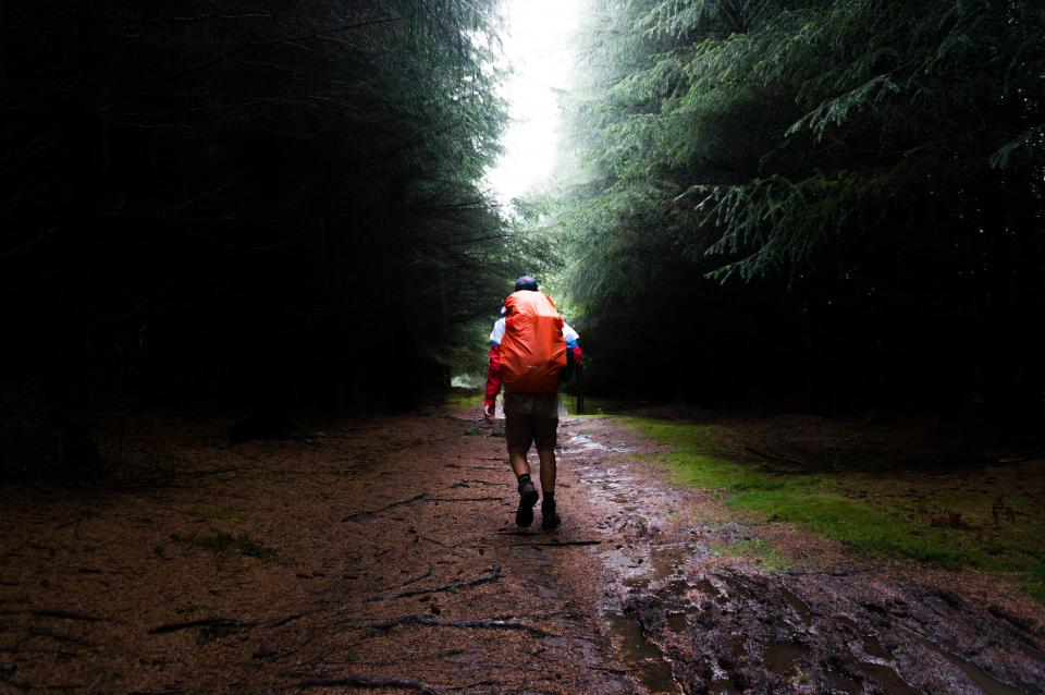 trees, grass, rain, wet, road, pathway, leaves, wood, travel, adventure, outdoor, hike, mountaineer, people, man, walking