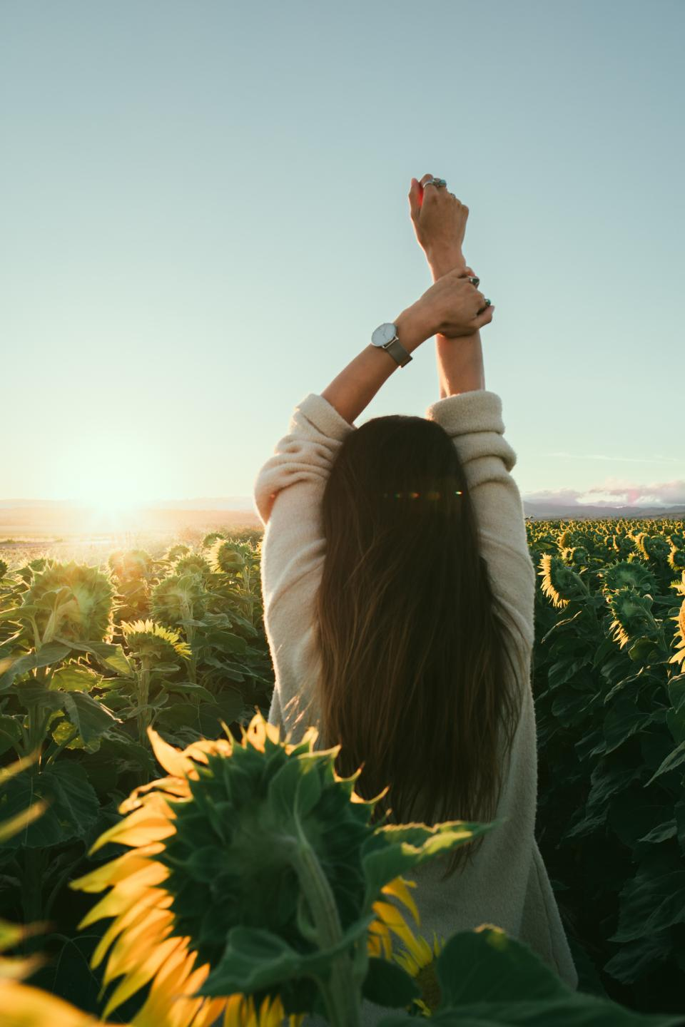 flower, yellow, petal, bloom, garden, plant, nature, autumn, fall, sunflower, people, woman, morning, sun, stretch, watch, accessory