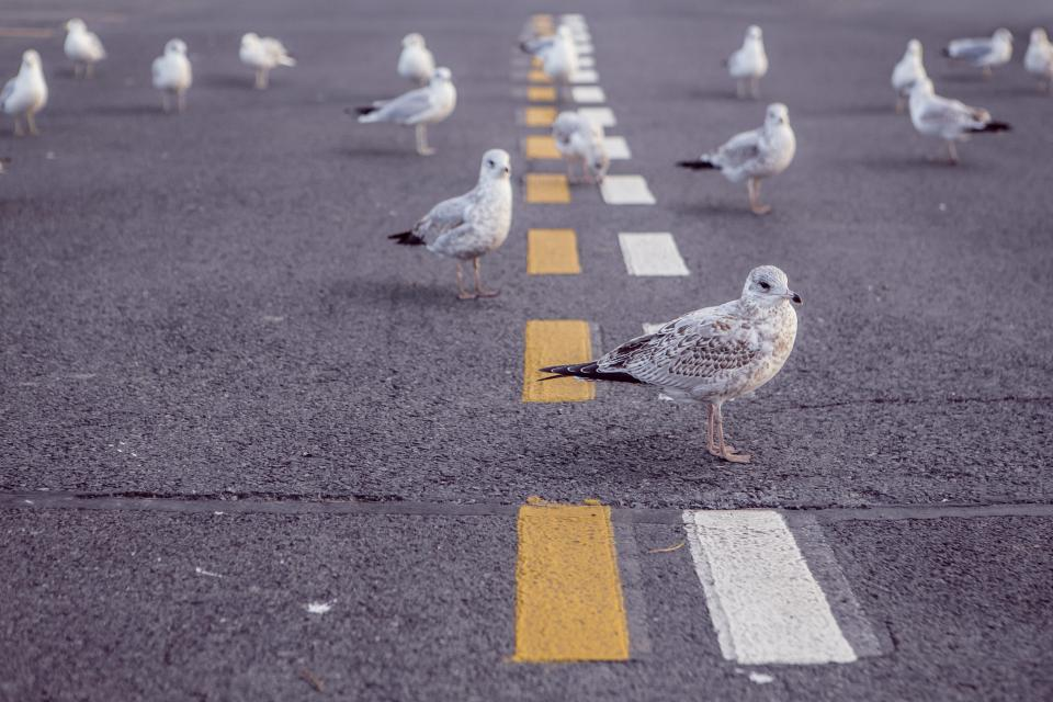 seagulls birds pavement road
