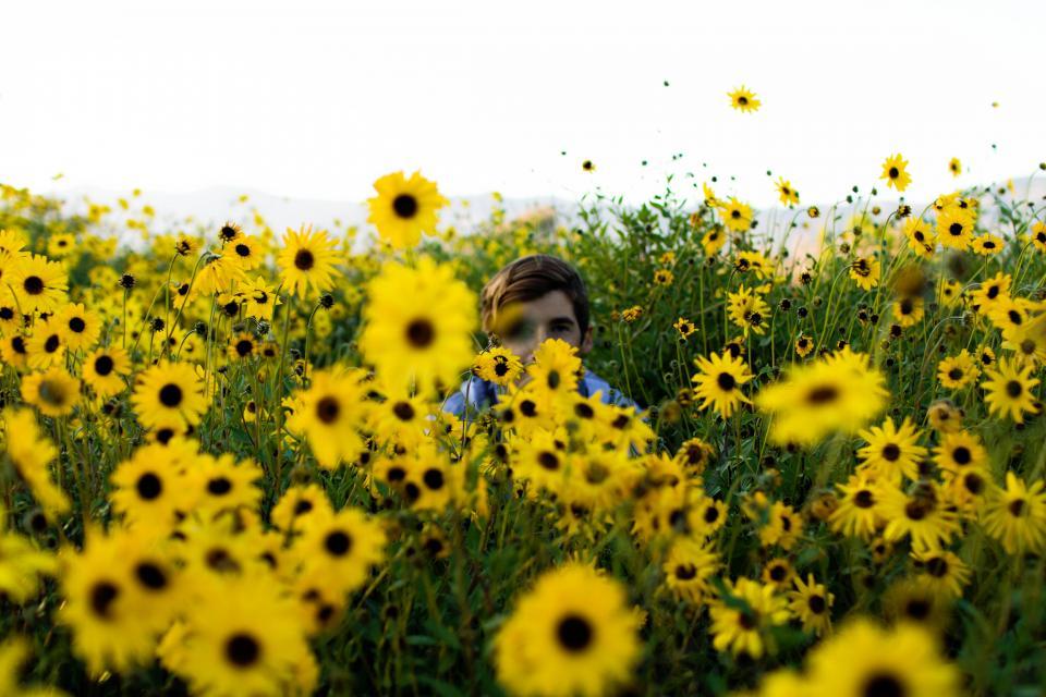 nature, flowers, yellow, sunflowers, people, man, hiding, guy, millenials