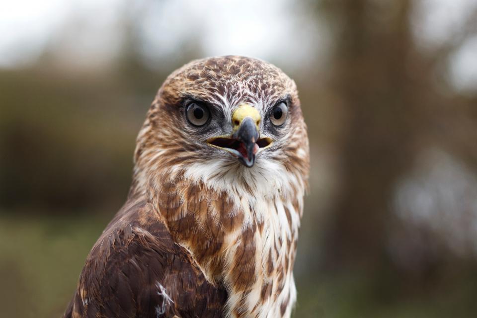 bird beak feather animal fly owl eyes