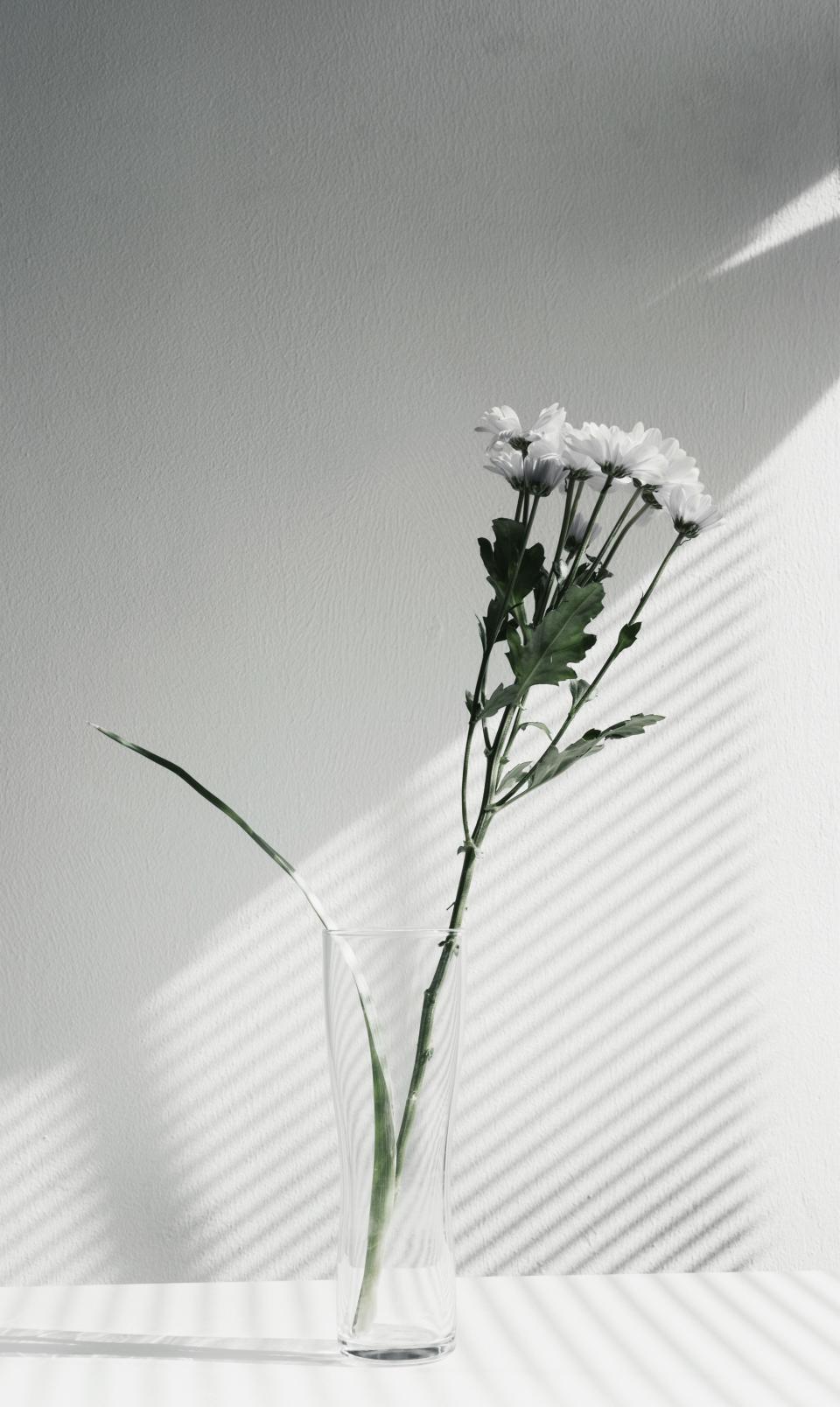 flower, vase, display, black and white