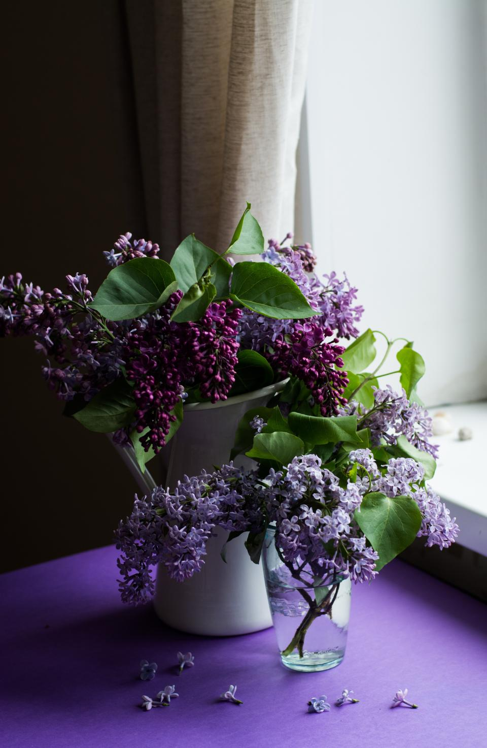 purple, flower, bloom, blossom, green, leaf, nature, vase, petals, interior, display