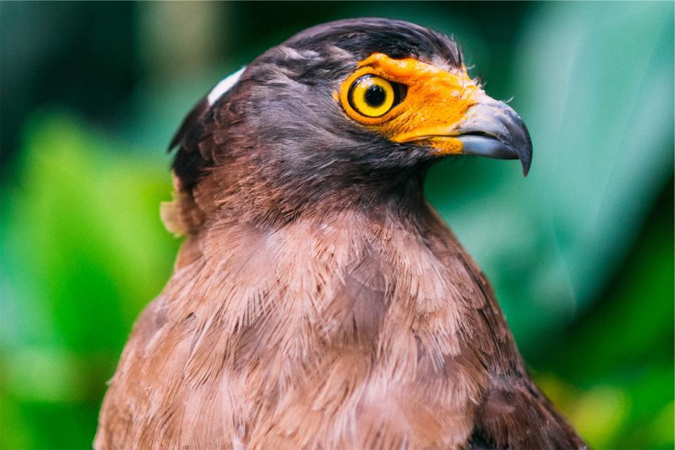 鳥動物くちばし目