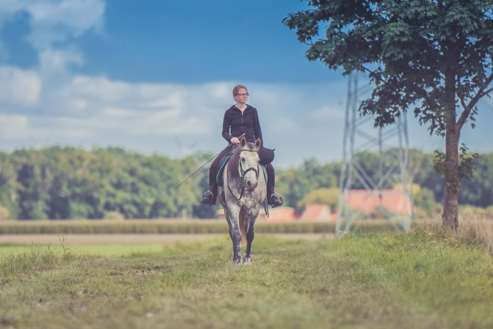 horse, animal, field, farm, green, grass, trees, plant, blur, people, woman, girl, ride, blue, sky, outdoor, adventure