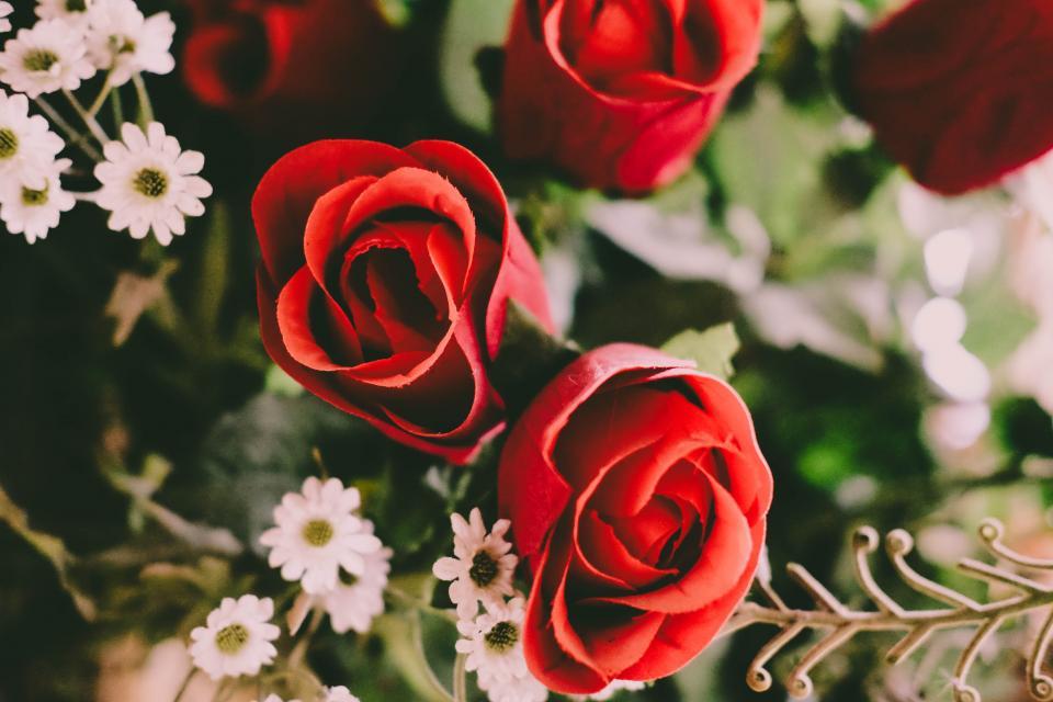 flower, red, petal, bloom, garden, plant, nature, autumn, fall, rose