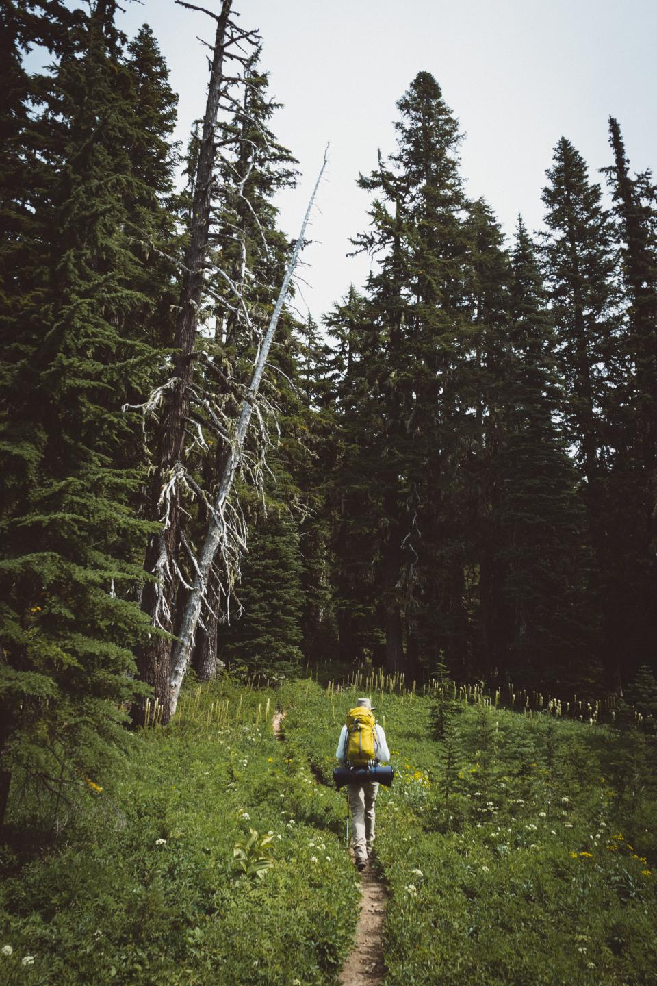 nature, people, travel, adventure, green, grass, trees, plants, woods, forest, mountain, mountaineer, alone, camp, outdoor