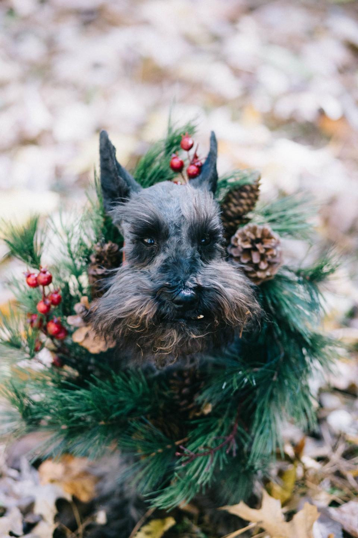 dog, puppy, pet, animal, christmas, green, garland, decoration, leaf, fall